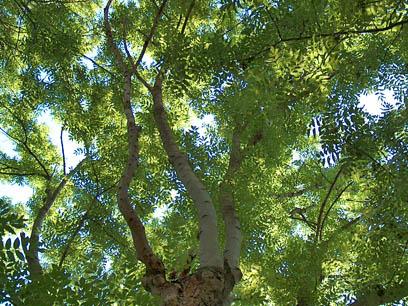 Wunschbaumde Baumgedichte Baum Gedichte Gedichte