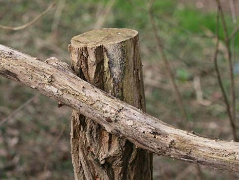 Baum Mensch