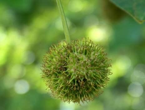 Wunschbaumde Baum Bild Baumfotografie