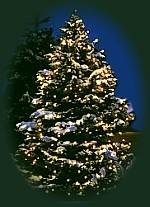 Was bedeutet der tannenbaum an weihnachten